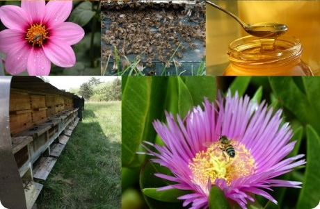 Foto-Collage am Bienenweg